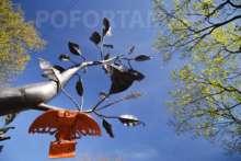 Сова на дереве желаний: Кронштадт