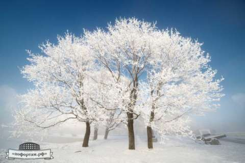 Кронштадт зимой: Клёны у Итальянского пруда